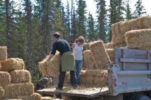 straw bales, Spring 2010